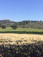 oliveto_2.jpg